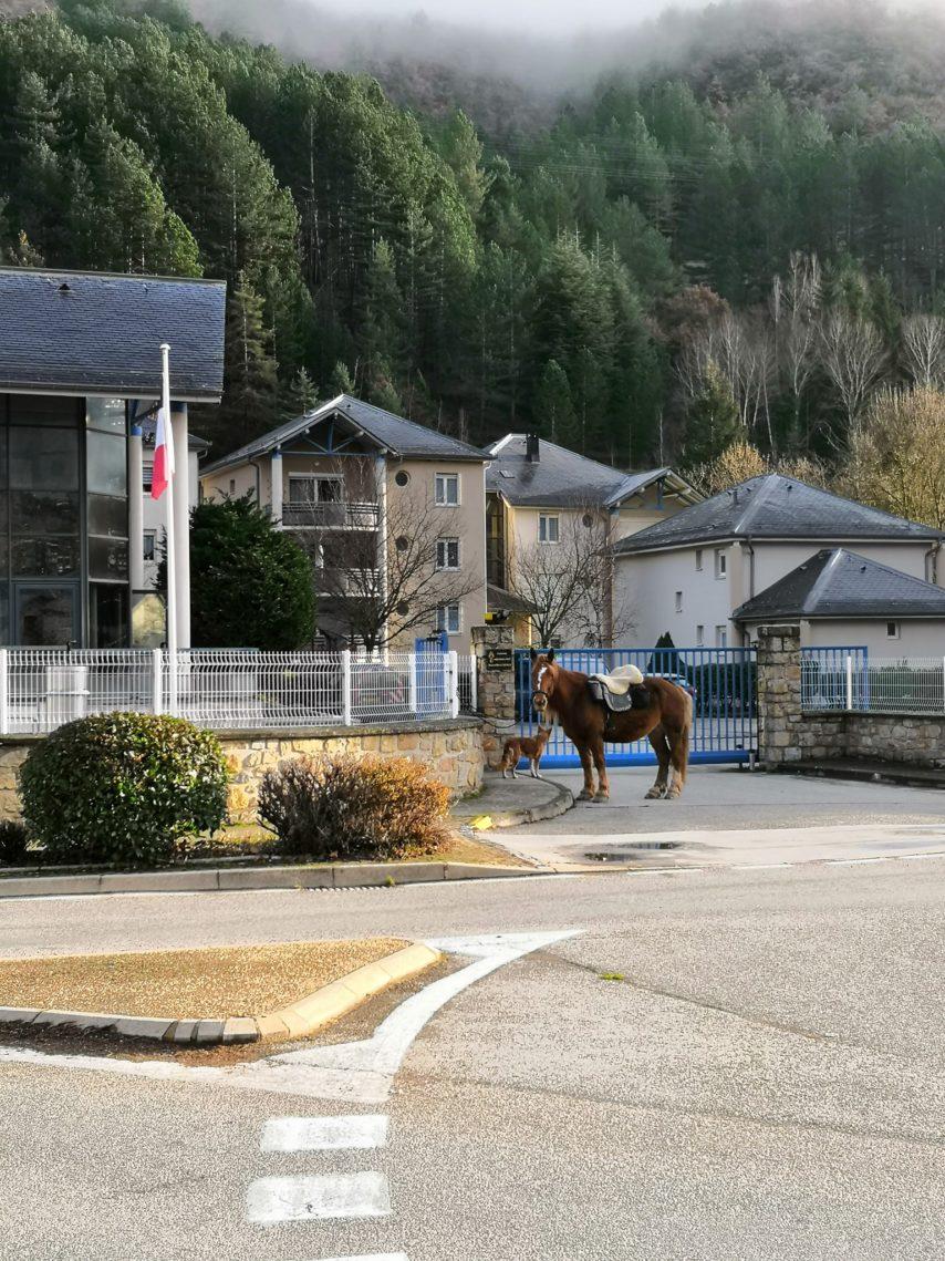 VIDÉO : à cheval pour récupérer son permis
